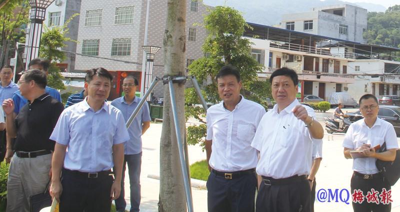 市领导莅梅调研村级集体经济发展和特色历史文化街区建设工作